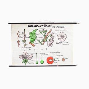 Botanische Vintage Lehrtafel über Blumen von Hagemann