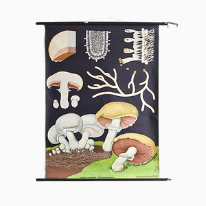 Vintage Botanical Mushroom Educational Chart by Jung, Koch & Quentell for Hagemann, 1960s