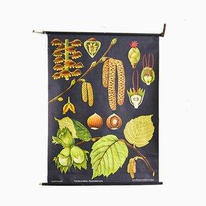 Ausrollbare botanische Vintage Lehrtafel von Jung, Koch & Quentell für Hagemann