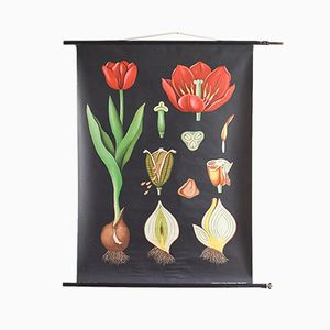 Charte Graphique Botanique Vintage par Jung, Koch & Quentell pour Hagemann