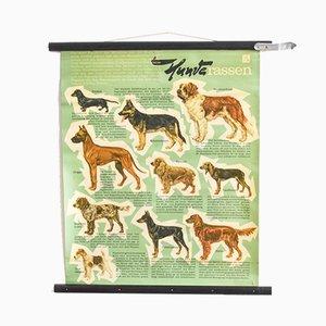 Póster educativo de perros vintage, años 60
