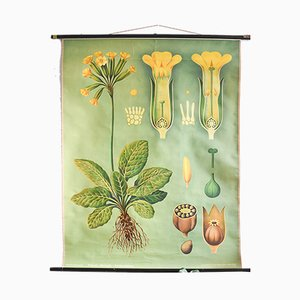Vintage Botanical Poster by Koch, Jung & Quentell for Hagemann