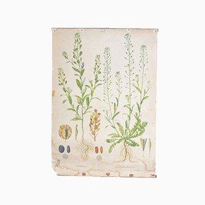 Affiche Pédagogique Florale, 1952