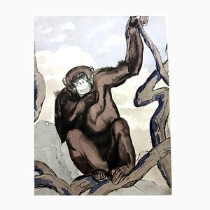 Chimpanzee Engraving by Paul Jouve for Rombaldi, 1950s