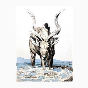 Acquaforte Antelope di Paul Jouve, 1950