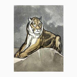 Gravure Tiger par Paul Jouve, 1950s