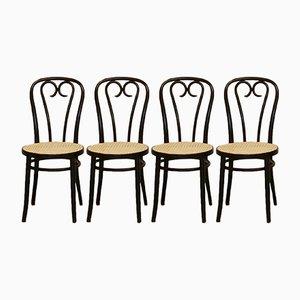 Chaises No. 16 en Bois Courbé par Michael Thonet pour ZPM Radomsko, 1970s, Set de 4