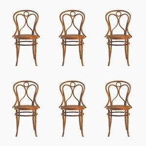 Nr. 19 Stühle aus Bugholz von Fischel, 1900er, 6er Set