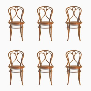 Sillas nº 19 de madera curvada de Fischel, 1900s. Juego de 6