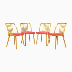 Beech U-300 Dining Chairs by Antonín Suman for Interiér Praha, 1970s, Set of 4
