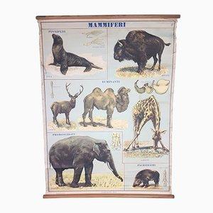 Affiche Mammals de Vallardis Didáctica, Italie, 1960s