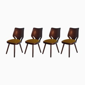 Walnut Samouraï Chairs from TON, 1960s, Set of 4