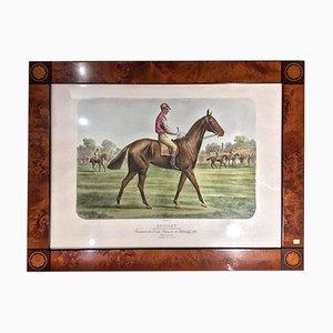 Grabado de hombre a caballo con marco de raíz, década de 1880