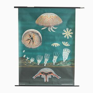 Jelly Fish Print from Hagemann, 1960s
