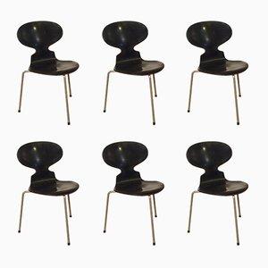 Chaises Ant par Arne Jacobsen pour Fritz Hansen, 1950s, Set de 6