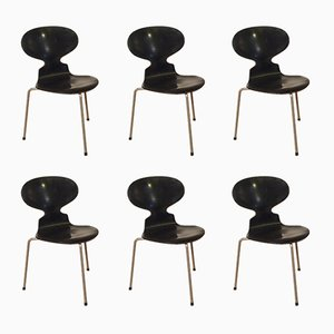 Sillas Ant s de Arne Jacobsen para Fritz Hansen, años 50. Juego de 6