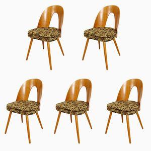 Vintage Dining Chairs by Antonín Šuman for Tatra, 1960s, Set of 5