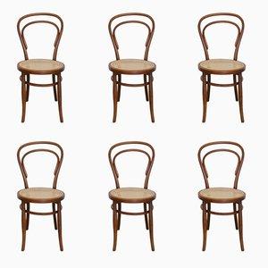Nr. 14 Esszimmerstühle von Michael Thonet für Josef Hofmann, 1900er, 6er Set