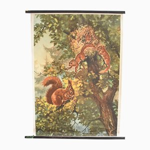 Schaubild mit rotem europäischem Eichhörnchen von Hagemann, 1960er