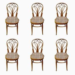 Antike Lotus Stühle von Michael Thonet für Thonet, 6er Set