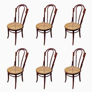 Chaises Thonet Antiques, Set de 6