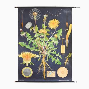 Dandelion Nursery Poster from Hagemann, 1960s