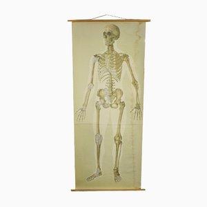Vintage Linen Skeleton School Poster, 1920s