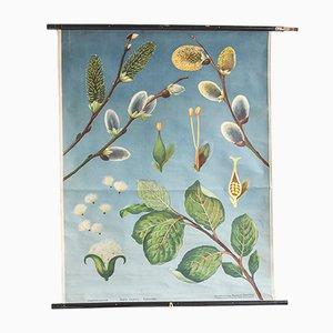 Illustration Florale de Hagemann, 1960s
