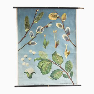 Impresión floral de Hagemann, años 60