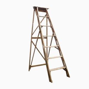 Wooden Ladder, 1950s