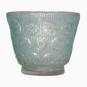 Edelweiss Vase von René Lalique, 1937