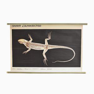 Vintage Lizard Poster, 1960s