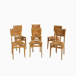 Französische Modell C Esszimmerstühle von Marcel Gascoin, 1950er, 6er Set