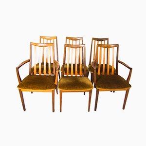 Mid-Century Fresco Esszimmerstühle & Carver von G-Plan, 6er Set