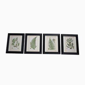 Stampe botaniche antiche di Anne Pratt, metà XIX secolo, set di 4