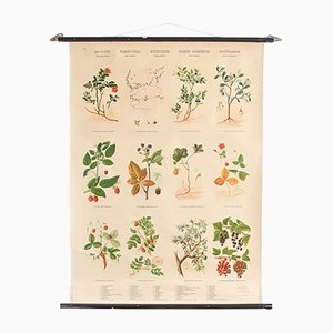 Berries Botanical Pull-Down Chart from Hagemann, 1960s