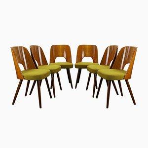Sedie da pranzo Mid-Century di Oswald Haerdtl per Ton, anni '50, set di 6
