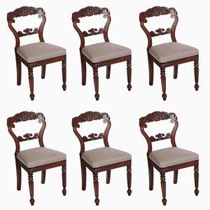 Geschnitzte kubanische Esszimmerstühle aus Mahagoni, 1830er, 6er Set