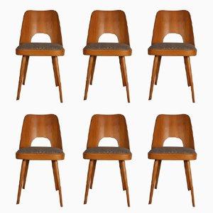 Modell 515 Stühle aus Buche mit Stoffsitz von Oswald Haerdtl für TON, 1955, 6er Set