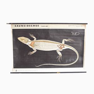 Poster vintage raffigurante una lucertola