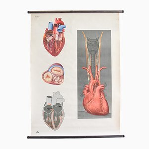 Poster vintage anatomico raffigurante il cuore