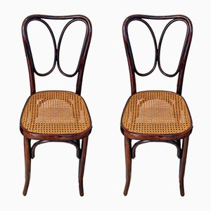 Art Nouveau Mahogany No. 243 Chairs by J. & J. Kohn, 1900s, Set of 2