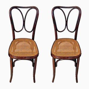 Jugendstil No. 243 Stühle aus Mahagoni von J. & J. Kohn, 1900er, 2er Set