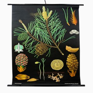 Vintage Pine Tree School Wall Chart by Jung, Koch, & Quentell for Hagemann