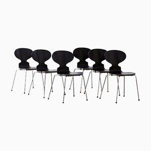 Sillas Ant de Arne Jacobsen, años 50. Juego de 6