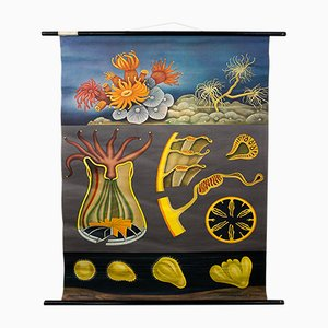 Vintage Lehrtafel zu Steinkorallen von Jung, Koch, & Quentell für Hagemann, 1970er