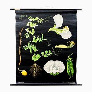 Stampa vintage di Jung, Koch, & Quentell per Hagemann