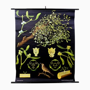 Vintage Mistletoe Wall Chart by Jung, Koch, & Quentell for Hagemann