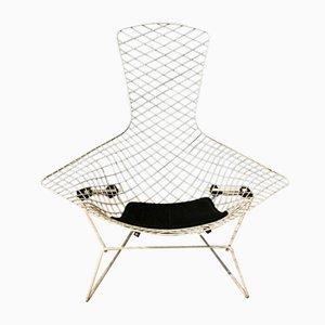 Weißer Bird Stuhl mit schwarzem Kissen von Harry Bertoia für Knoll International, 1952