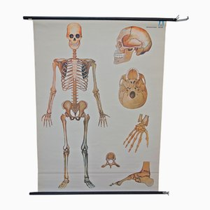 Póster de esqueleto vintage de Arrhenius Verlag Bochum